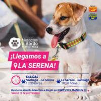 Mascota a Bordo está en La Serena